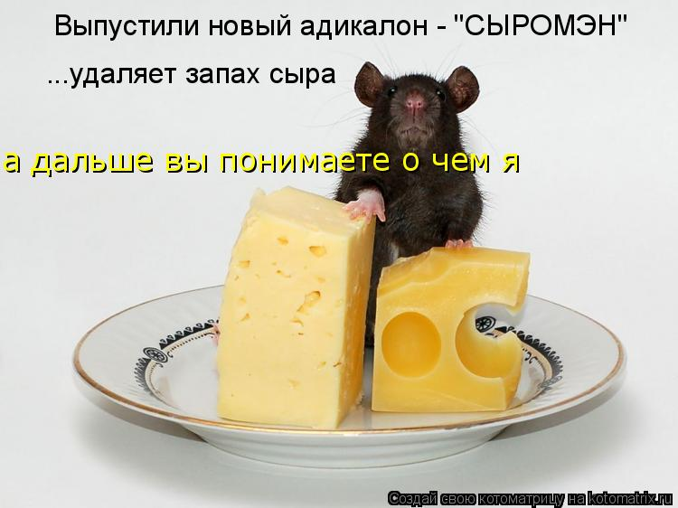 """Котоматрица: Выпустили новый адикалон - """"СЫРОМЭН"""" ...удаляет запах сыра а дальше вы понимаете о чем я"""