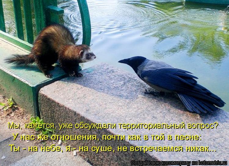 Котоматрица: Мы, кажется, уже обсуждали территориальный вопрос? У нас же отношения, почти как в той в песне: Ты - на небе, я - на суше, не встречаемся никак...