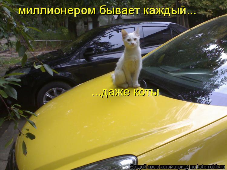 Котоматрица: миллионером бывает каждый... ...даже коты