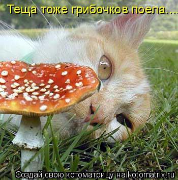 Котоматрица: Теща тоже грибочков поела......