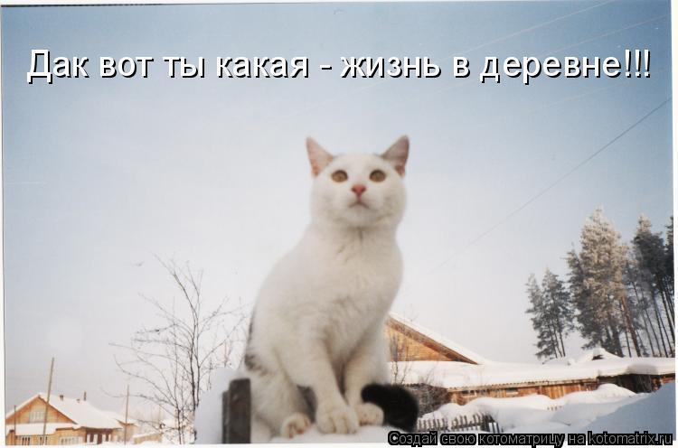 Котоматрица: Дак вот ты какая - жизнь в деревне!!!