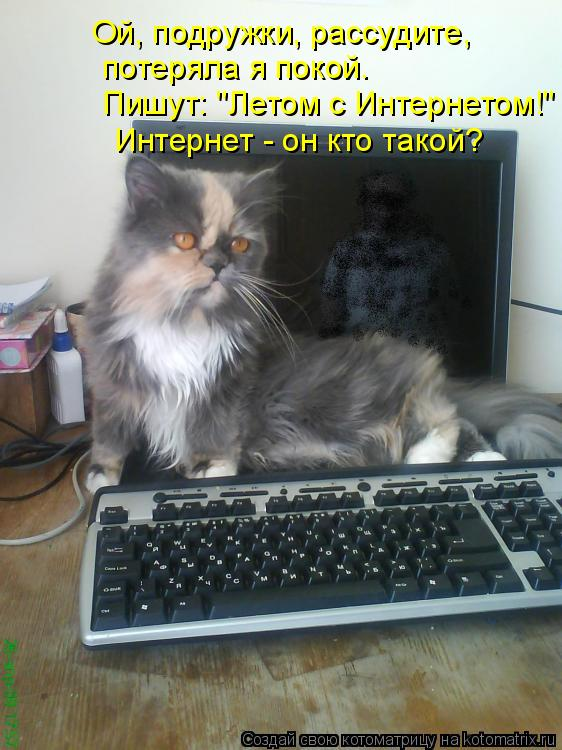 """Котоматрица: Ой, подружки, рассудите,  потеряла я покой. Интернет - он кто такой? Пишут: """"Летом с Интернетом!"""""""