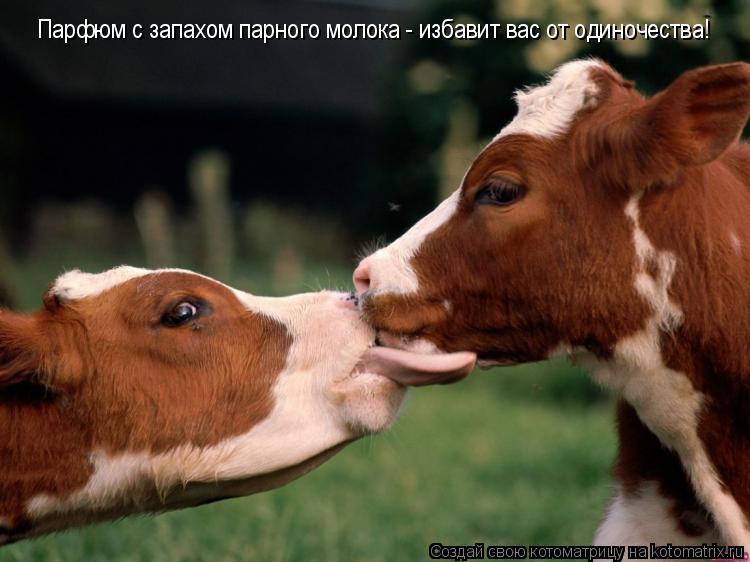 Котоматрица: Парфюм с запахом парного молока - избавит вас от одиночества!