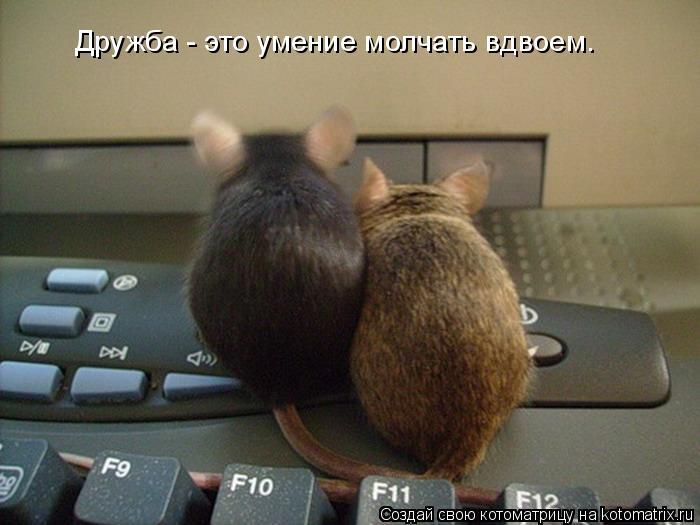 Котоматрица: Дружба - это умение молчать вдвоем.