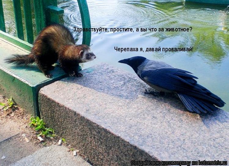 Котоматрица: Здравствуйте, простите, а вы что за животное? Черепаха я, давай проваливай!