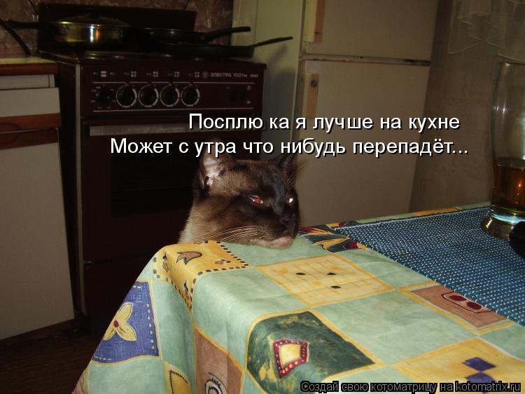 Котоматрица: Посплю ка я лучше на кухне Может с утра что нибудь перепадёт...