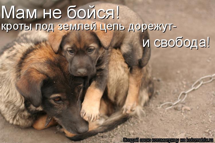 Котоматрица: Мам не бойся! кроты под землей цепь дорежут- и свобода!