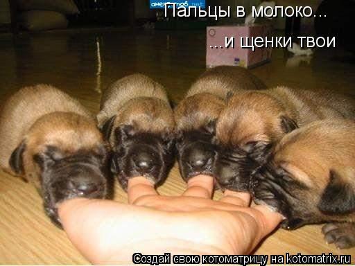 Котоматрица: ...и щенки твои Пальцы в молоко...