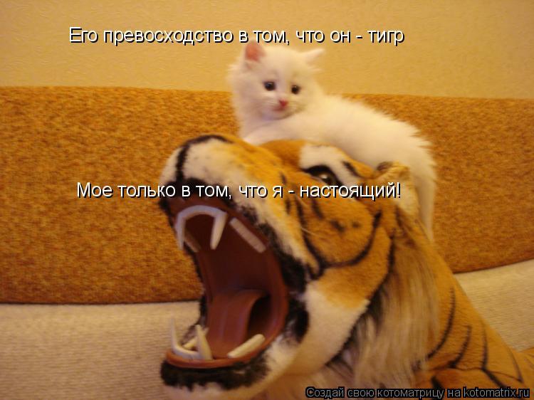 Котоматрица: Мое только в том, что я - настоящий! Его превосходство в том, что он - тигр