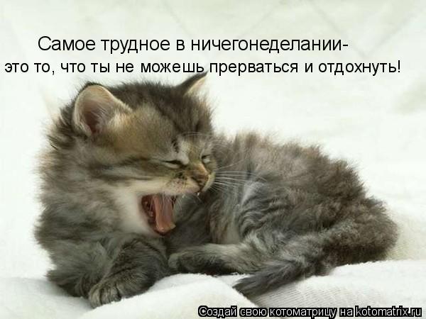 Котоматрица: Самое трудное в ничегонеделании- это то, что ты не можешь прерваться и отдохнуть!