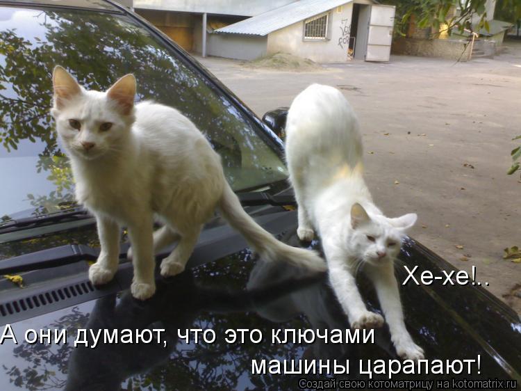 Котоматрица: Хе-хе!.. А они думают, что это ключами  машины царапают!