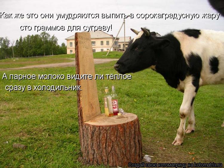 Котоматрица: Как же это они умудряются выпить в сорокаградусную жару  сто граммов для сугреву!  А парное молоко видите ли тёплое сразу в холодильник.