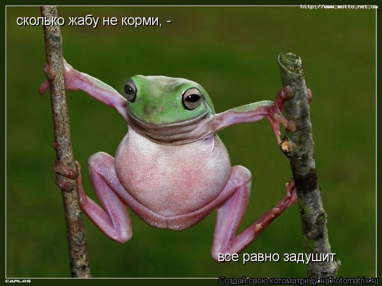 Котоматрица: cколько жабу не корми, - все равно задушит