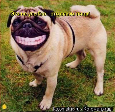 Котоматрица: Это не улыбка - это спазм лица!