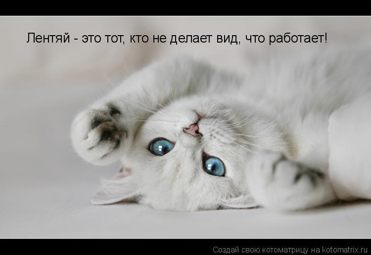 Котоматрица: Лентяй - это тот, кто не делает вид, что работает!