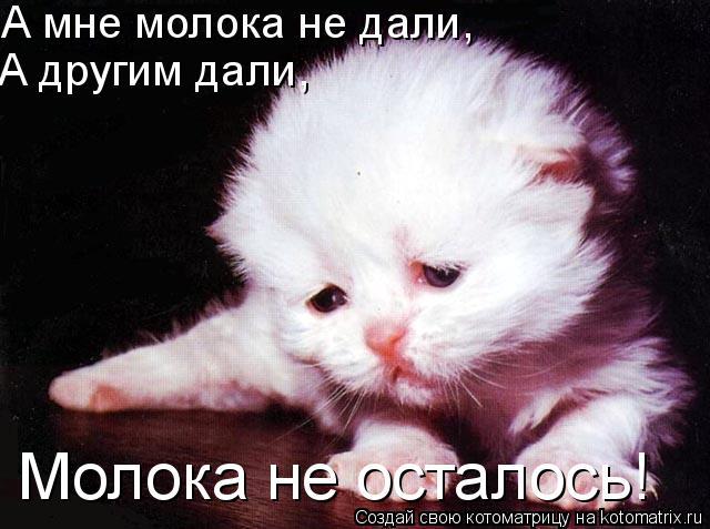 Котоматрица: А мне молока не дали, А другим дали, Молока не осталось!