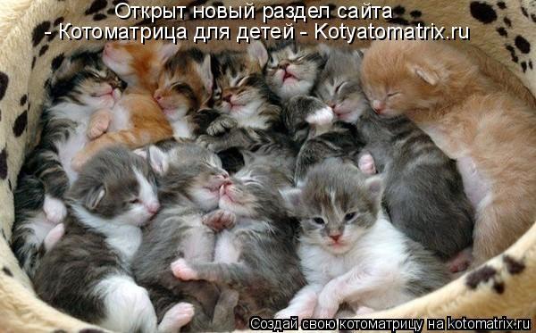 Котоматрица: Открыт новый раздел сайта   - Котоматрица для детей - Kotyatomatrix.ru