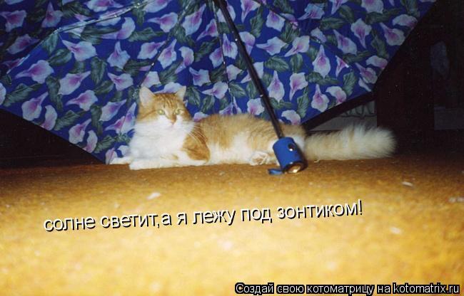 Котоматрица: солне светит,а я лежу под зонтиком!