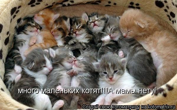 Котоматрица: много маленьких котят!!!А мамы нету!