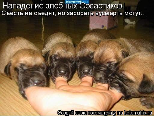 Котоматрица: Нападение злобных Сосастиков! Съесть не съедят, но засосать вусмерть могут...