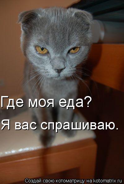 Котоматрица: Я вас спрашиваю. Где моя еда?