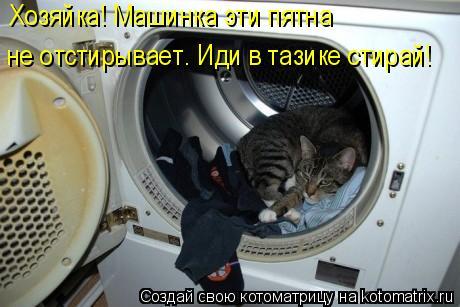 Котоматрица: Хозяйка! Машинка эти пятна не отстирывает. Иди в тазике стирай!
