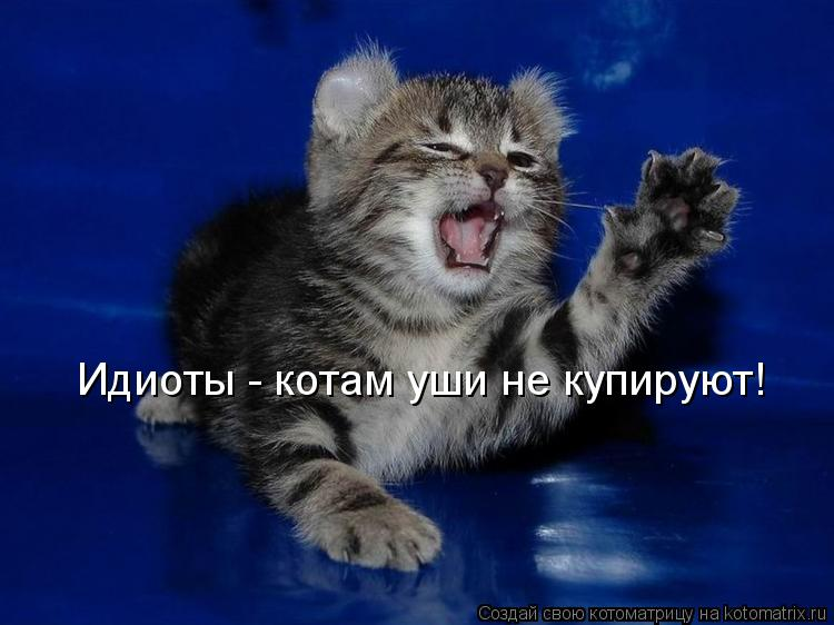 Котоматрица: Идиоты - котам уши не купируют!
