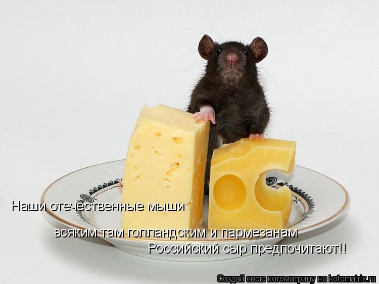 Котоматрица: Наши отечественные мыши всяким там голландским и пармезанам Российский сыр предпочитают!!