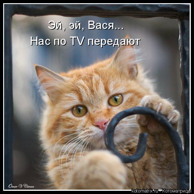 Котоматрица: Эй, эй, Вася... Нас по TV передают