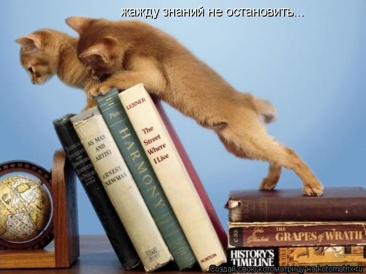 Котоматрица: жажду знаний не остановить...