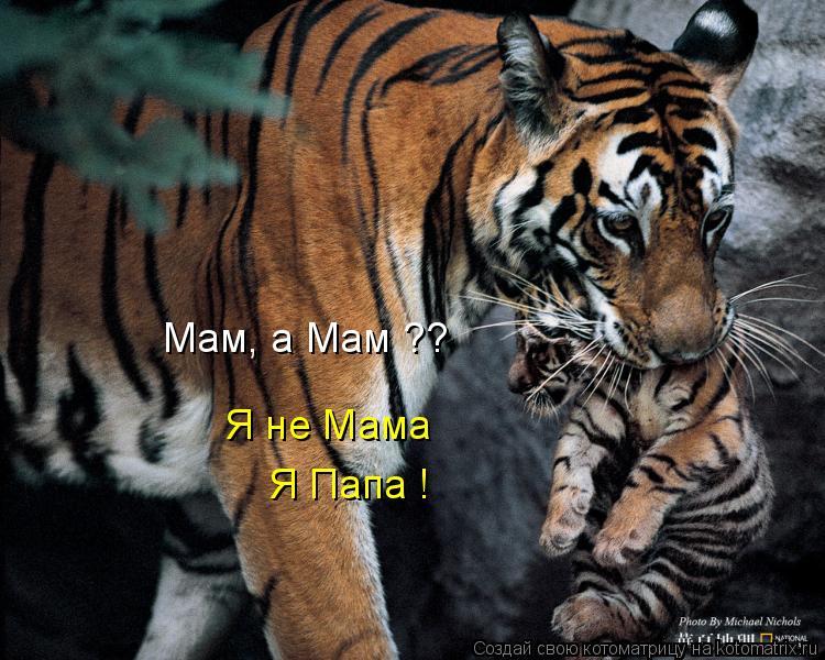 Котоматрица: Мам, а Мам ?? Я не Мама Я Папа !