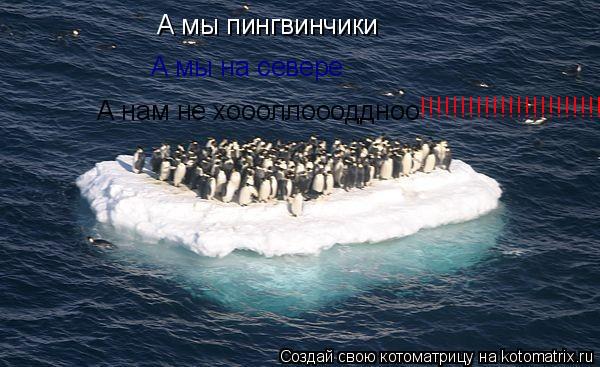 Котоматрица: А мы пингвинчики А мы на севере А нам не хоооллоооддноо !!!!!!!!!!!!!!!!!!!!!!!!!!!!!