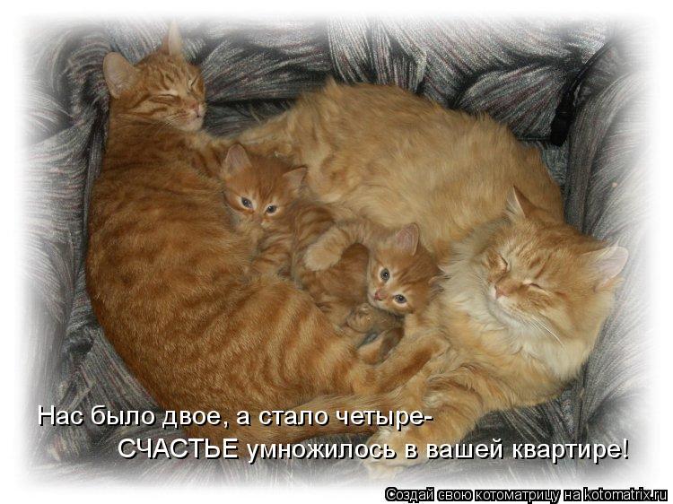 Котоматрица: Нас было двое, а стало четыре- СЧАСТЬЕ умножилось в вашей квартире!