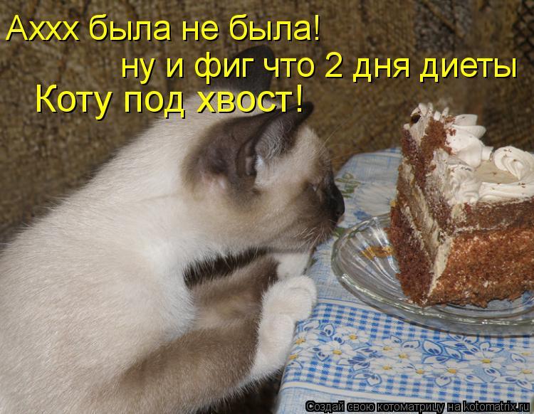 Котоматрица: Аххх была не была! Коту под хвост! ну и фиг что 2 дня диеты
