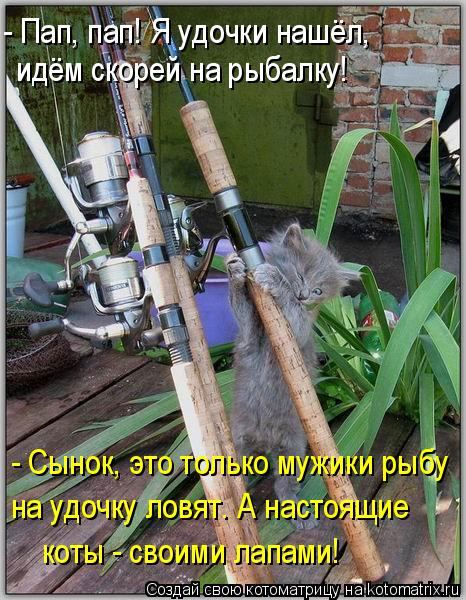 Котоматрица: - Пап, пап! Я удочки нашёл,  идём скорей на рыбалку! - Сынок, это только мужики рыбу на удочку ловят. А настоящие  коты - своими лапами!
