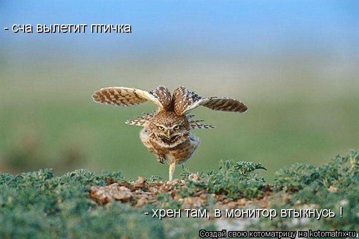 Котоматрица: - сча вылетит птичка  - хрен там, в монитор втыкнусь !
