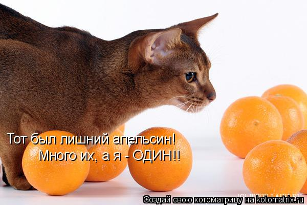 Котоматрица: Тот был лишний апельсин! Много их, а я - ОДИН!!