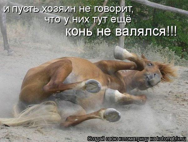 Котоматрица: и пусть хозяин не говорит, что у них тут ещё  конь не валялся!!!