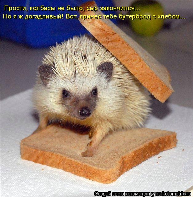 Котоматрица: Прости, колбасы не было, сыр закончился...  Но я ж догадливый! Вот, принес тебе бутерброд с хлебом...
