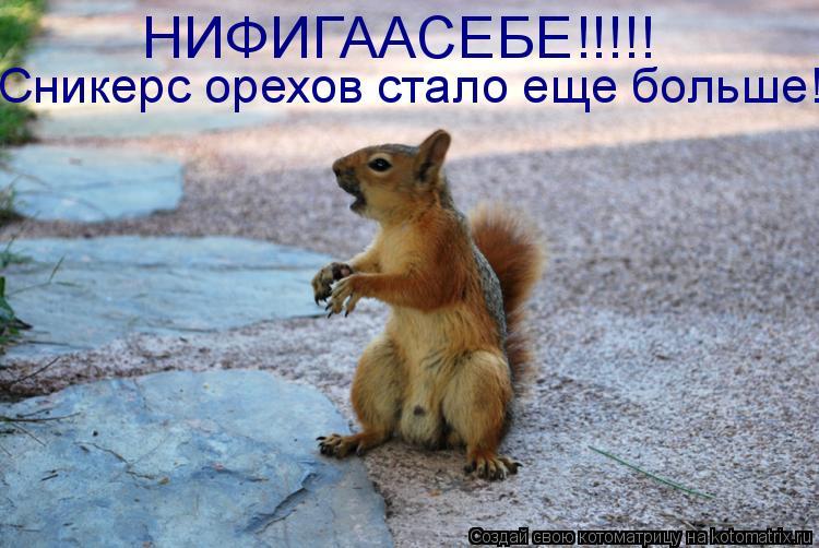 Котоматрица: НИФИГААСЕБЕ!!!!! Сникерс орехов стало еще больше!