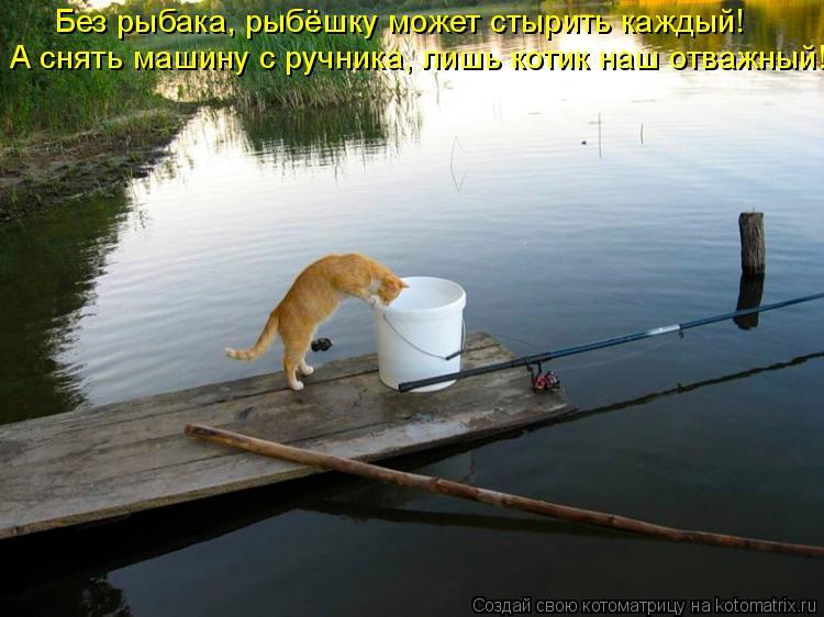 Котоматрица: Без рыбака, рыбёшку может стырить каждый! А снять машину с ручника, лишь котик наш отважный!