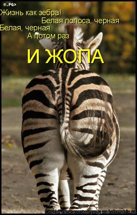 Котоматрица: Жизнь как зебра! Белая полоса, черная Белая, черная А потом раз И ЖОПА