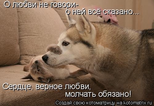Котоматрица: О любви не говори- о ней всё сказано... Сердце, верное любви, молчать обязано!