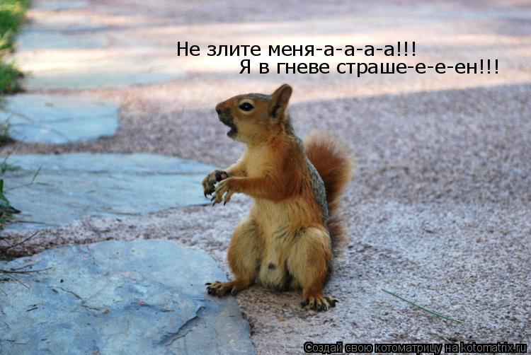 Котоматрица: Не злите меня-а-а-а-а!!! Я в гневе страше-е-е-ен!!!