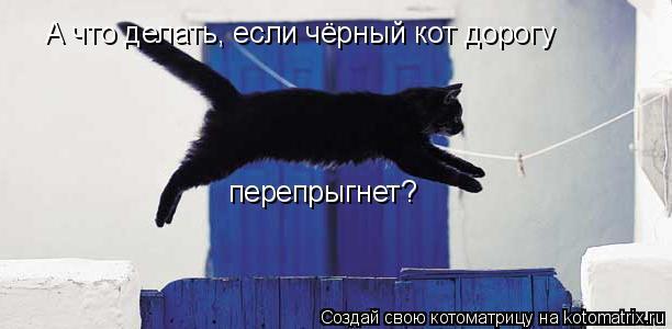 Котоматрица: А что делать, если чёрный кот дорогу  перепрыгнет?