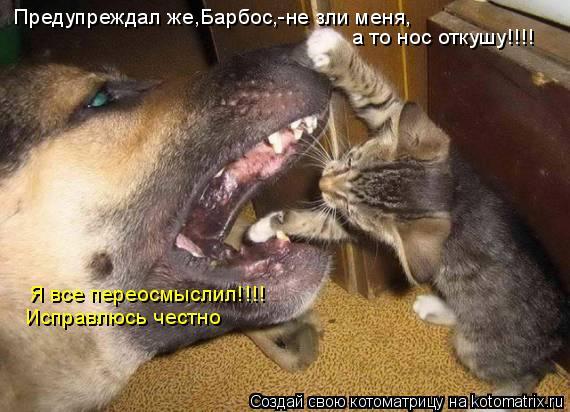 Котоматрица: Предупреждал же,Барбос,-не зли меня, а то нос откушу!!!! Я все переосмыслил!!!! Исправлюсь честно