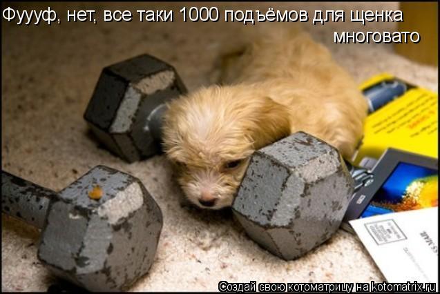 Котоматрица: Фуууф, нет, все таки 1000 подъёмов для щенка многовато