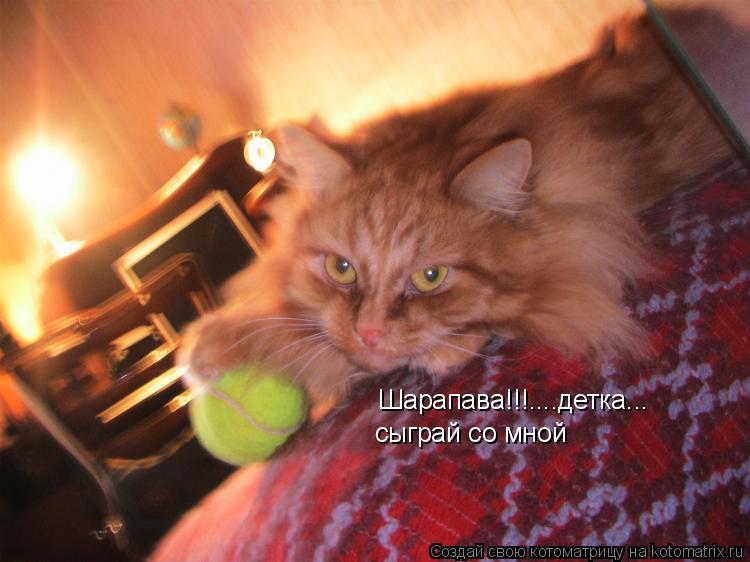 Котоматрица: Шарапава!!!....детка... сыграй со мной