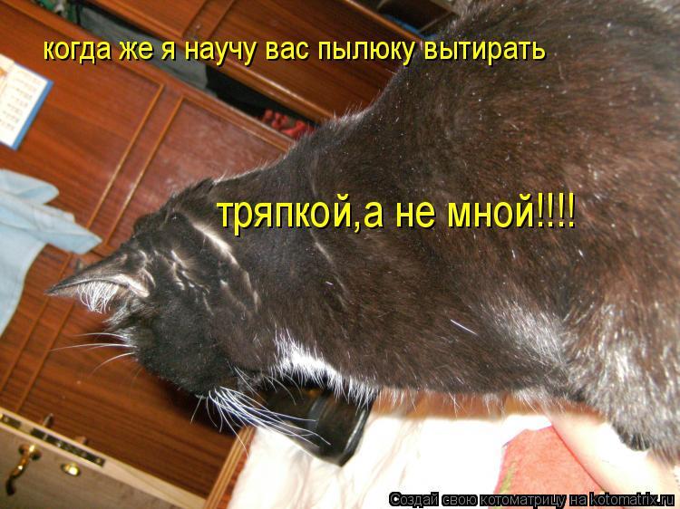 Котоматрица: когда же я научу вас пылюку вытирать тряпкой,а не мной!!!!