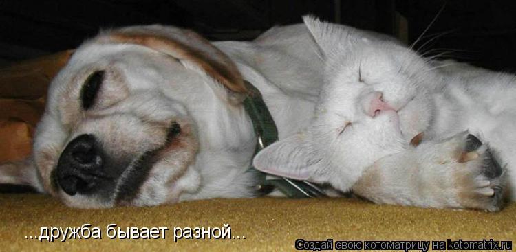 Котоматрица: ...дружба бывает разной...